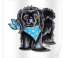 Black Pekingese Blue Prince Poster