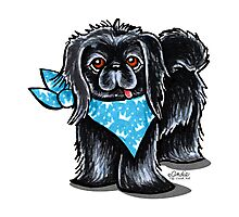 Black Pekingese Blue Prince Photographic Print
