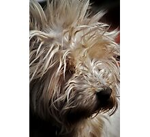 Hamish Has a Bad Hair Day Photographic Print