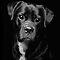 Man's Best Friend - Domestic Dogs