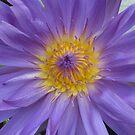 Beautiful water lily by Kasia  Kotlarska
