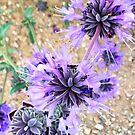 Parking lot flower in bloom by carol selchert