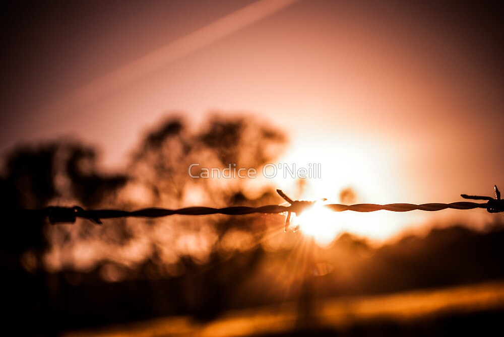 Autumn Wire by Candice O'Neill