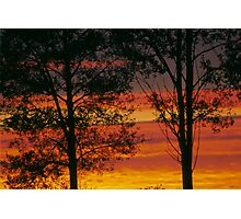 Sunrise trees Photographic Print