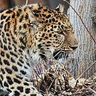 On The Prowl  by Gene Praag