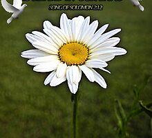 ⊱✿ ✿⊰⊹FLOWERS SONG OFSOLOMON BIBLICAL⊱✿ ✿⊰⊹ by ✿✿ Bonita ✿✿ ђєℓℓσ