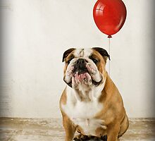 Bulldog Birthday wish by Mibellamore