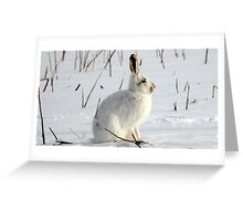 Can You Still Hare Me? Greeting Card
