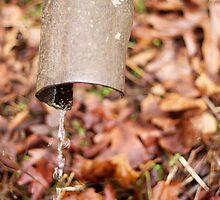Plumb Forgotten by capturedbykt