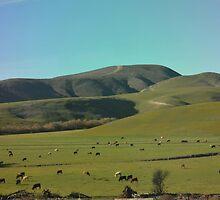 Cattle Farm by JimSchneider