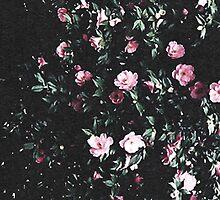 Roses by annabelrw