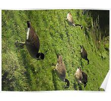 Goose Migration Poster