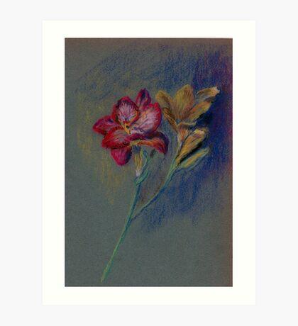 Flower-pastel sketch Art Print