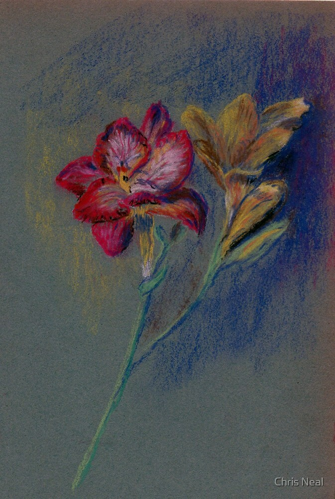 Flower-pastel sketch by Chris Neal