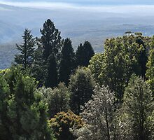 Mount Tomah View by Mandy  Harvey