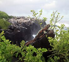 Galapagos Land Iguana by Sauropod8