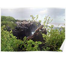 Galapagos Land Iguana Poster