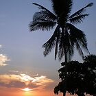 Costa Rican Sunset With Palm by Sauropod8