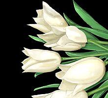 White Tulips on Black by Zdenek Sasek