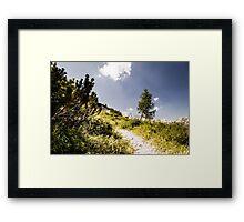 summer day on alps Framed Print