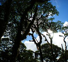 Sunlight Through The Scalesia Trees by Sauropod8