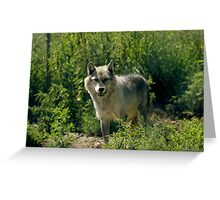 "'Timber Wolf"" Greeting Card"