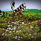 The Wild Bunch (please see description) by Kanages Ramesh
