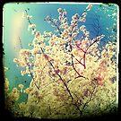 Cherry  by AnaBanana