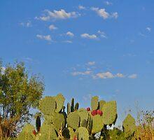 Cactus by Kristen O'Brian