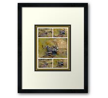PICKEREL FROG - Rana Palustris Framed Print