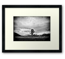 New Zealand - The Lonely Tree Framed Print