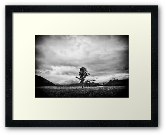 New Zealand - The Lonely Tree by lesslinear