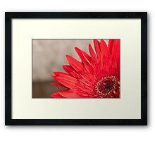 African Daisy 2 Framed Print