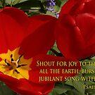 tulip shout! by dedmanshootn