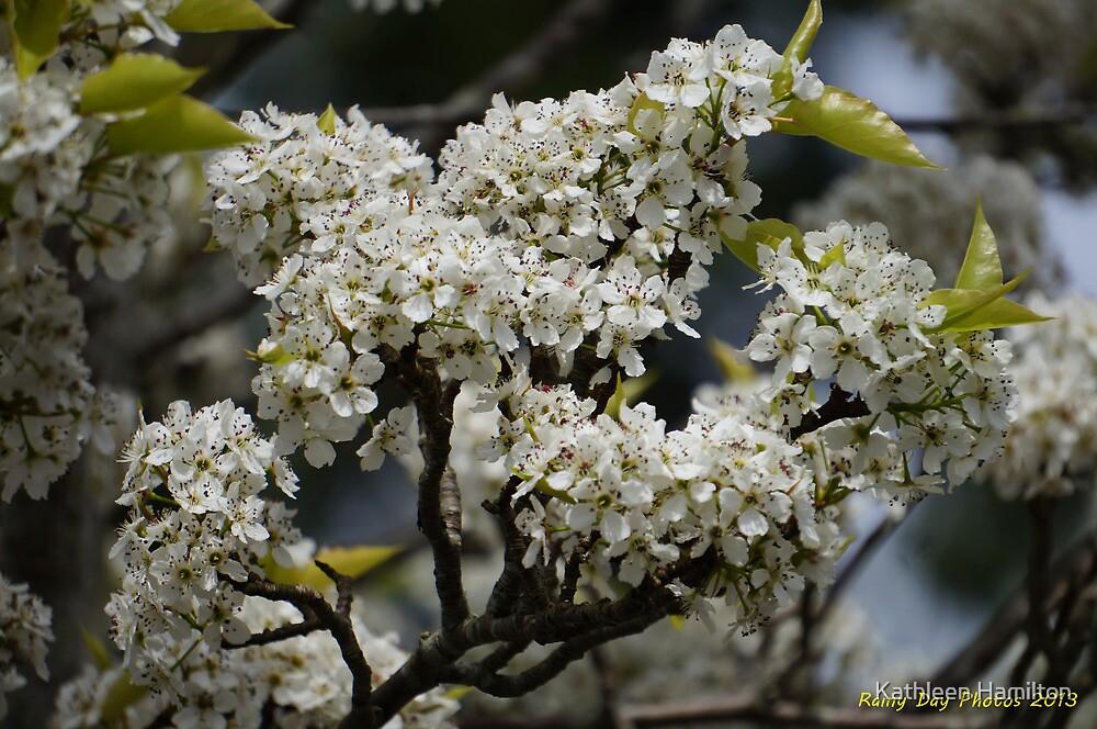 Ahhh...spring blooms! by Rainydayphotos
