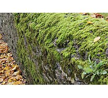 Mossy Dry Stone Wall  Photographic Print