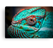 Tragan - Panther Chameleon Canvas Print