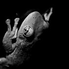 Tree Frog - Black & White by studio2eight