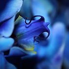 Mystic Blue Orchid by studio2eight