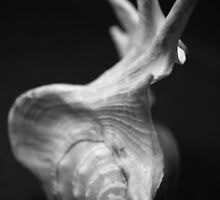 Shell Studies I by laurabaay