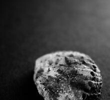 Shell Studies III by laurabaay