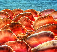 Conch Shells in Nassau, The Bahamas by Jeremy Lavender Photography