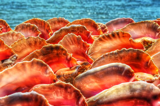 Conch Shells in Nassau, The Bahamas by 242Digital