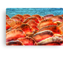 Conch Shells in Nassau, The Bahamas Canvas Print