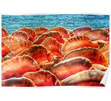 Conch Shells in Nassau, The Bahamas Poster