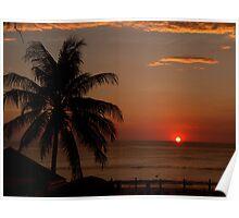 palm,phuket Poster