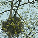 spring comes to my home by davvi