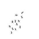 Ants on iPad by Nathalie Chaput