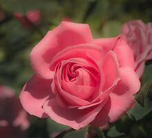 Bright Rose by Mandy  Harvey