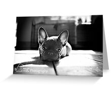 Oscar in deep thought Greeting Card